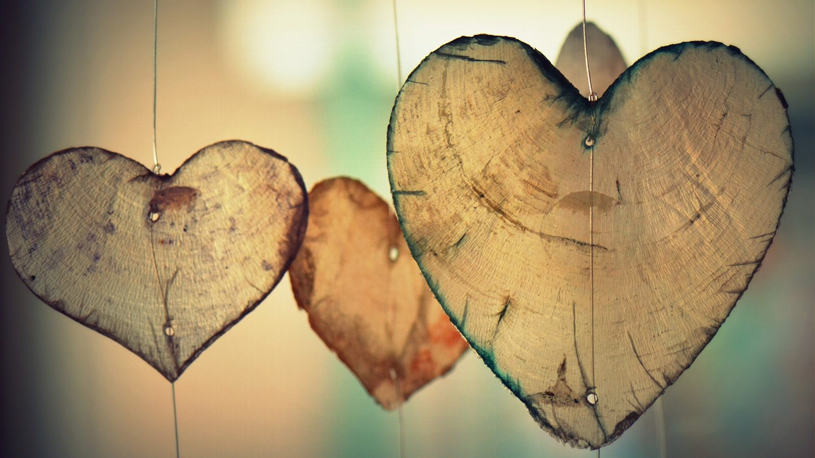 Happy St. Valentine's Day! Let Love Thrive.