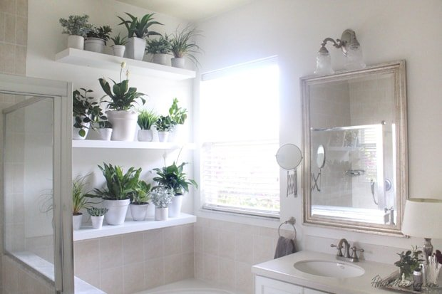 Bathroom Plant Shelves