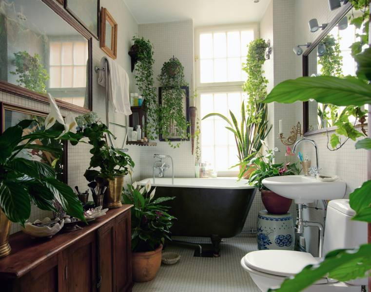 Cluttered Bathroom Plants