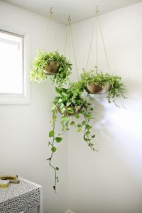 More Hanging Plants