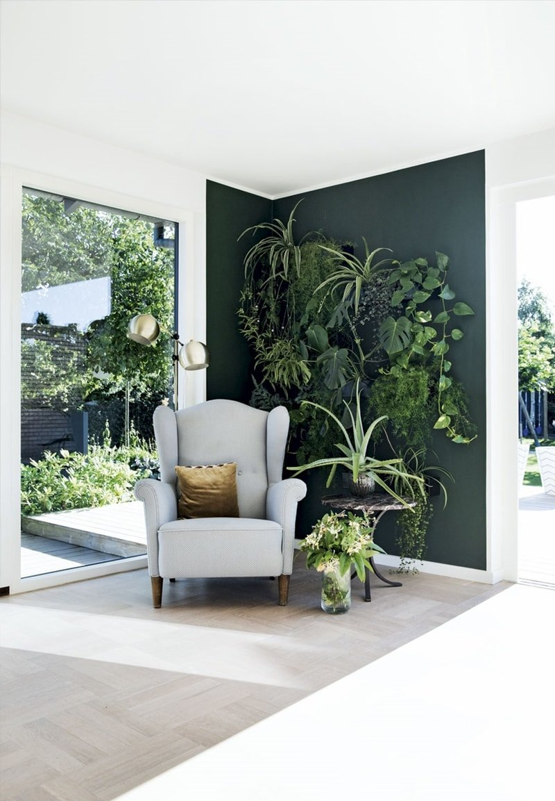 Plant Accent Wall