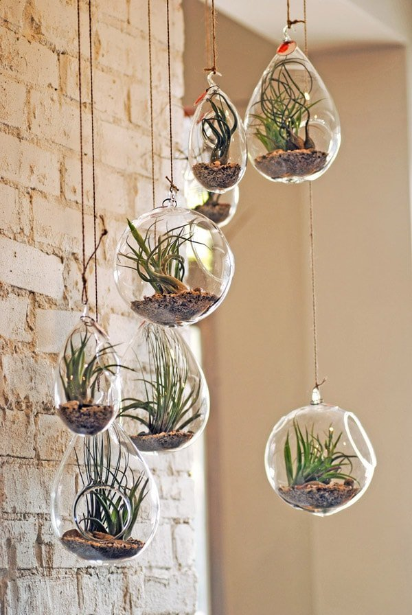 Plants in Glass Spheres