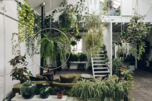 Warehouse Apartment with Plants