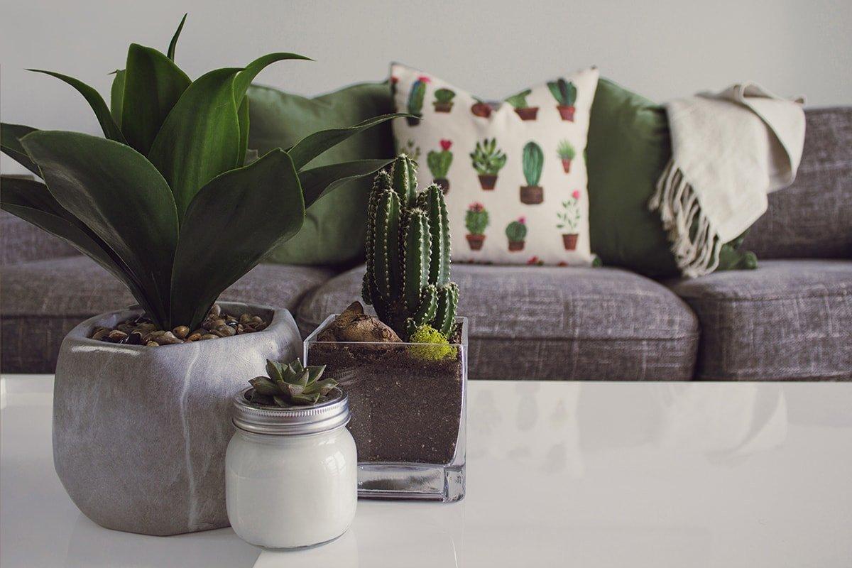 Accessorize Plants