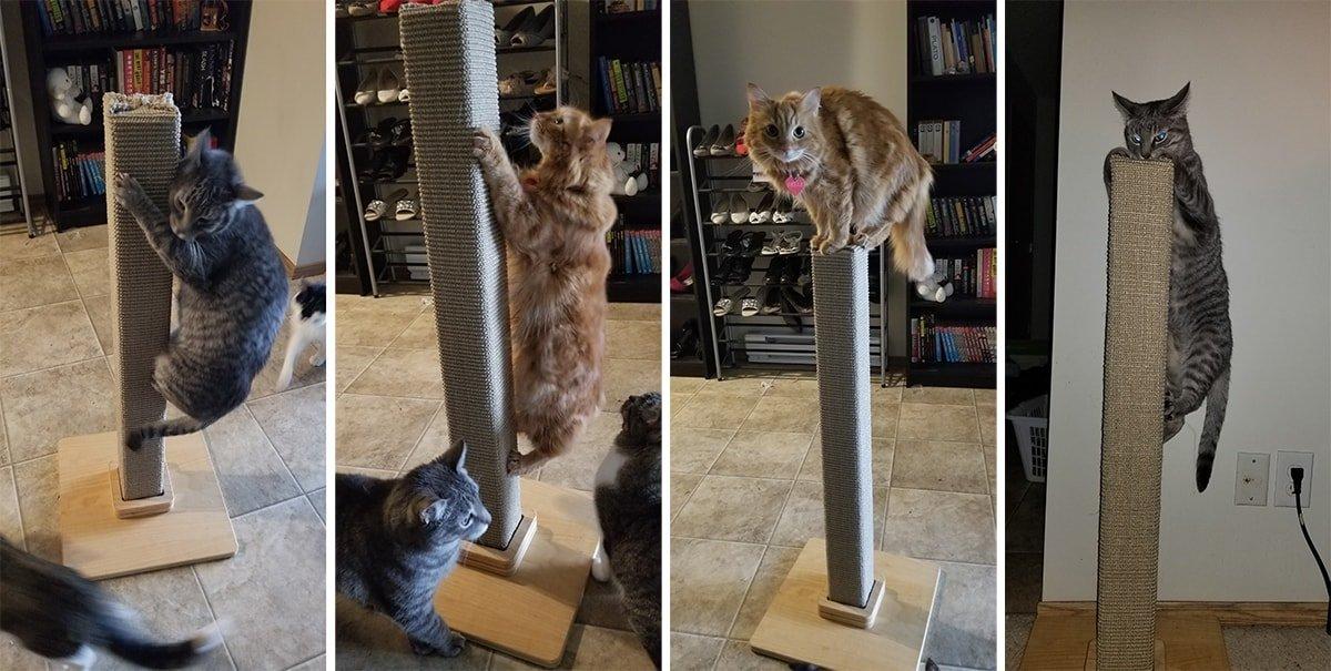 Climbing Cats