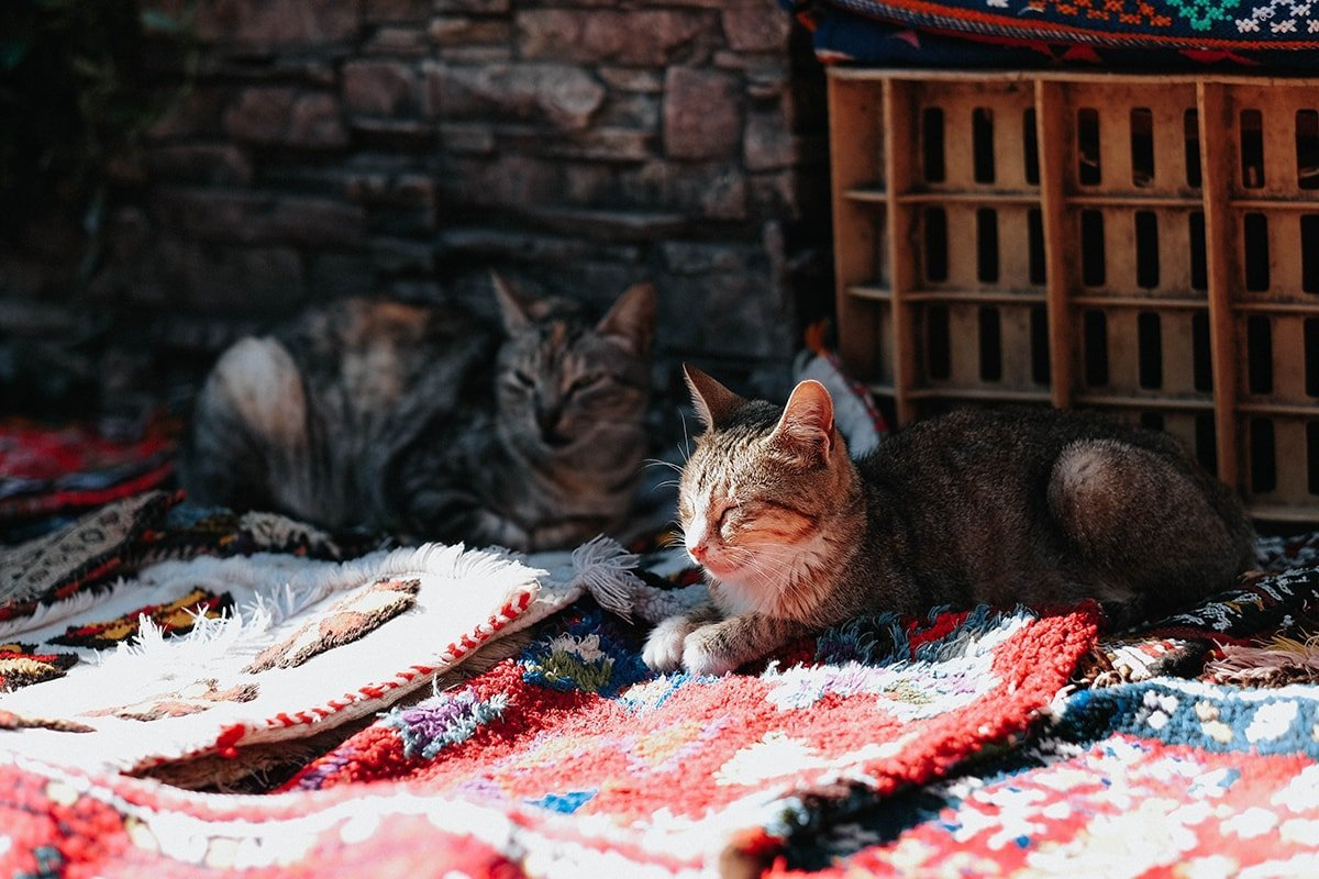 Cats sitting on a warm rug