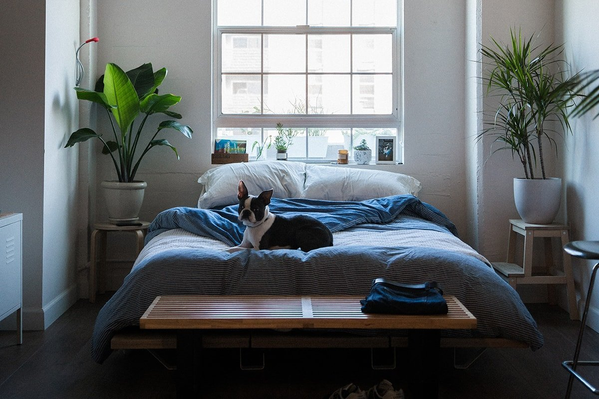 Bed in a small sized room