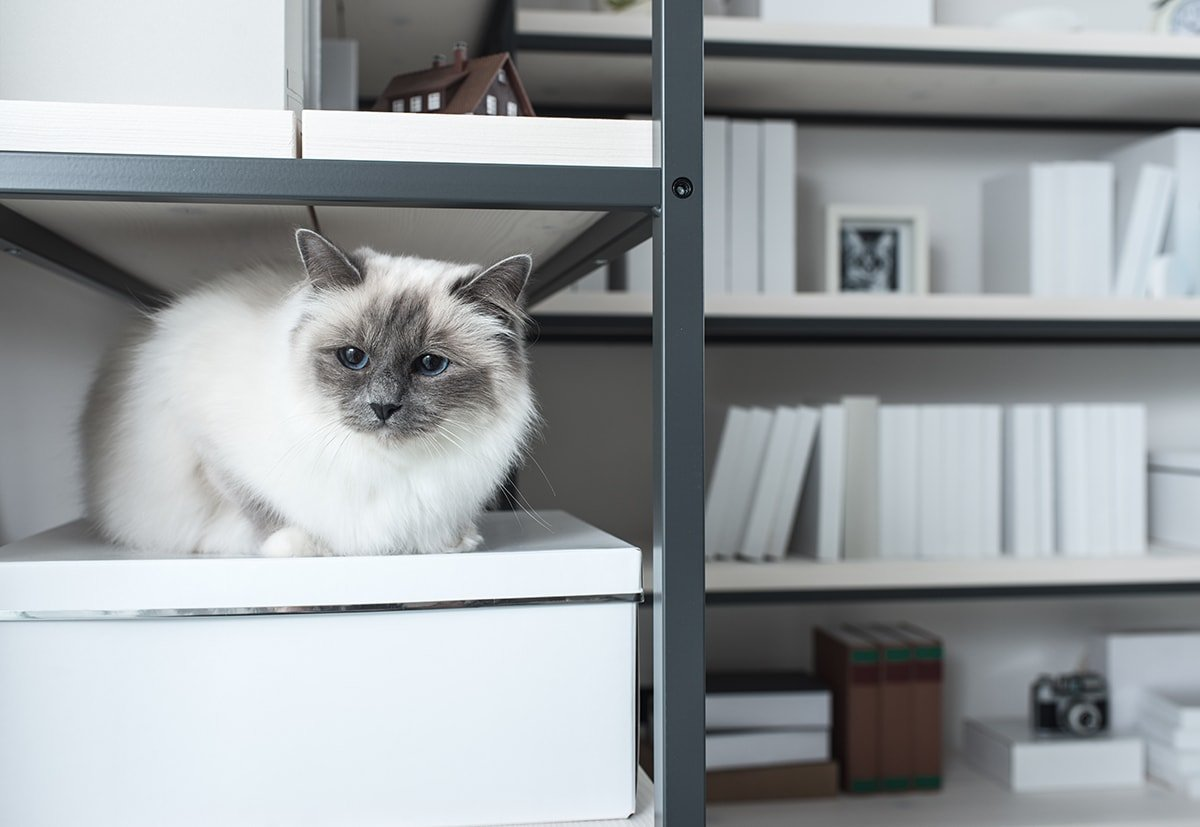 Cat exploring storage options and shelves