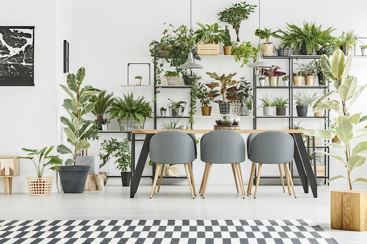 Room full of plants