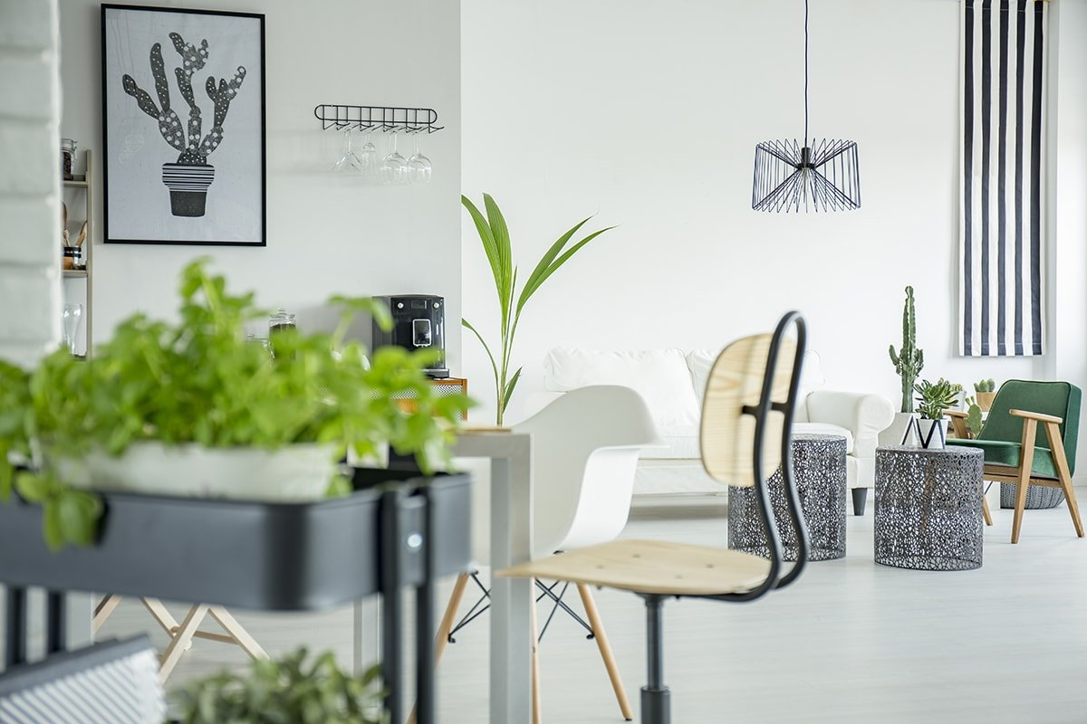 Bright open home interior with lots of house plants