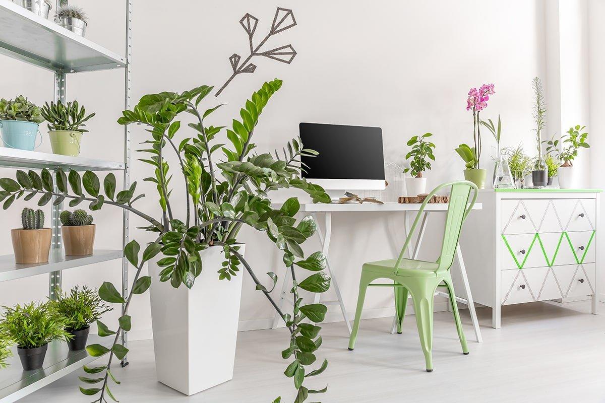 Clean room full of plants