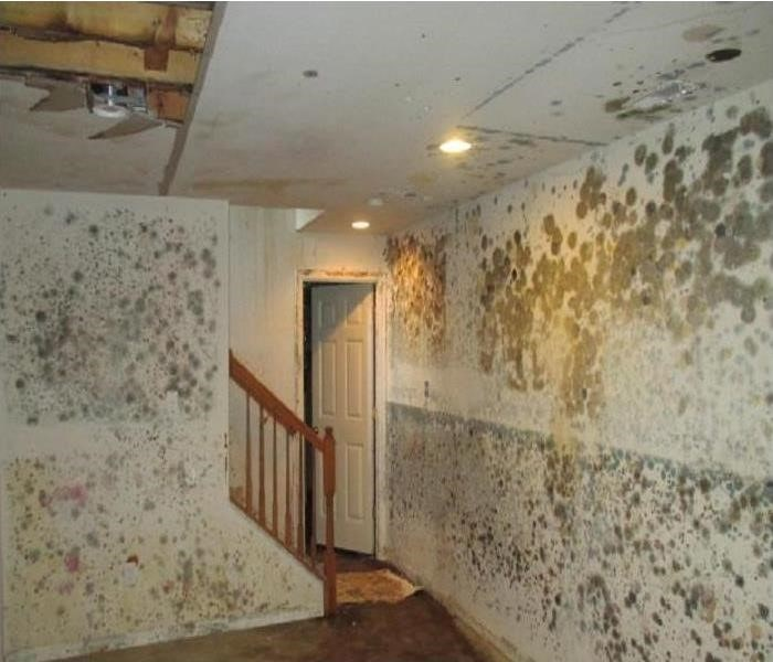 Home basement with mold on walls