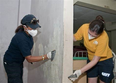 People removing mold from walls