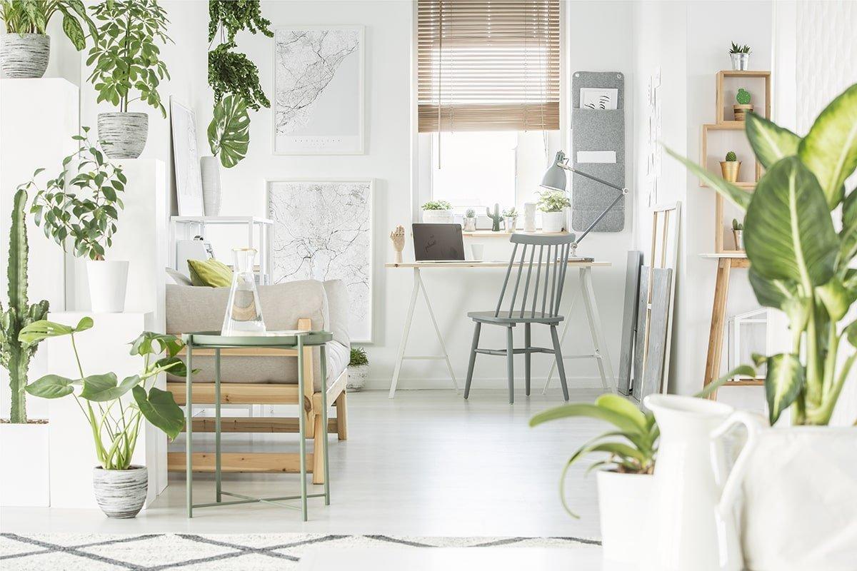 Bright room full of house plants